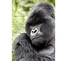Silverback Photographic Print