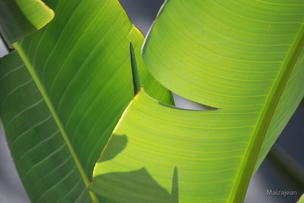 Banana Leaf XI by Maizajean