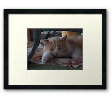 Rosco's Sleeping Framed Print