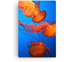 Glowing Jellies Canvas Print