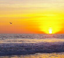Sunset Bird by Summersfotos