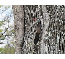 Red Billed Hornbill Photographic Print