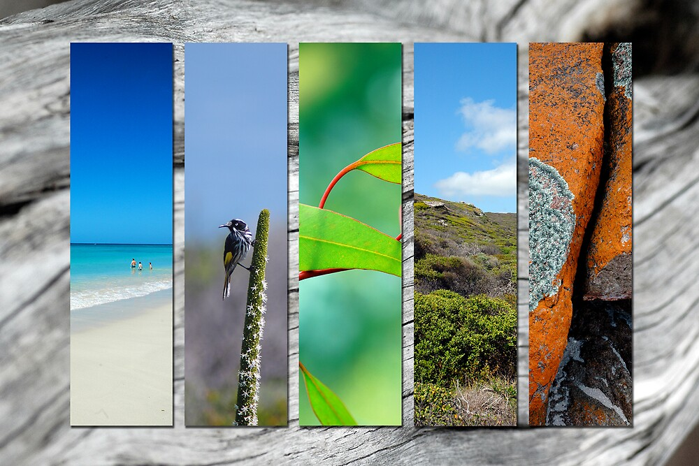 Western Australian Spring by samatar