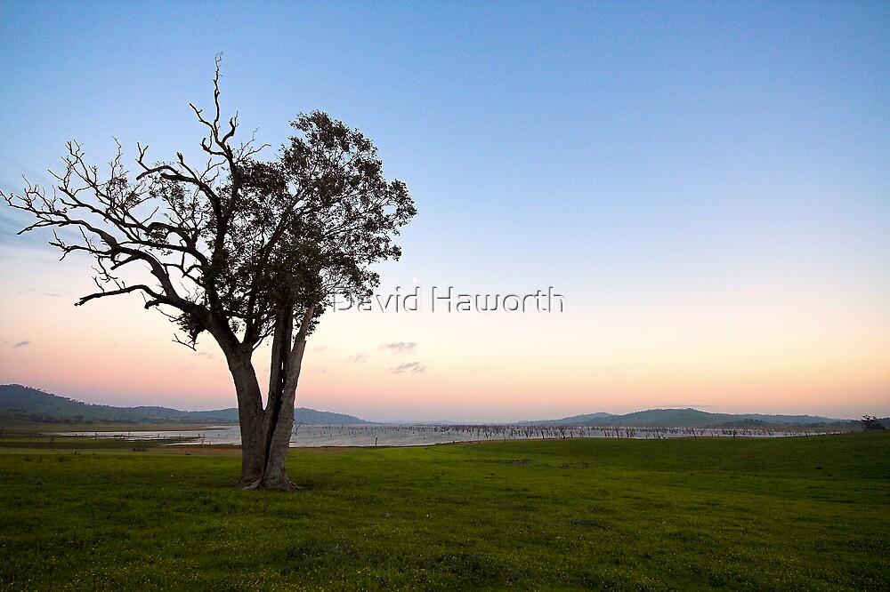 The Tree The Sky and You by David Haworth