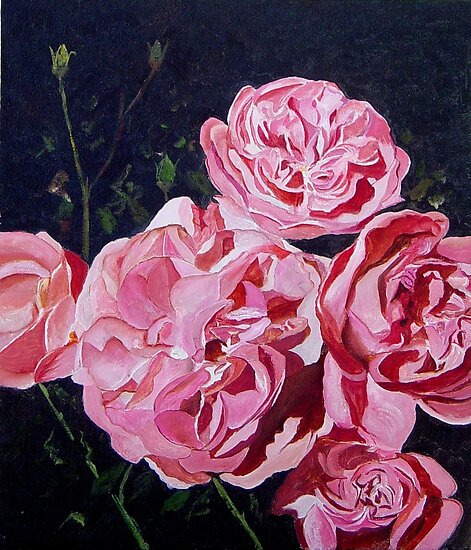 Roses by calimero