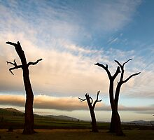 The Dance of the Trees by David Haworth