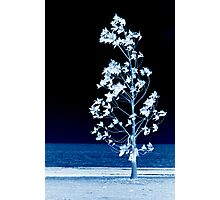 The Night Wind Has Secrets To Tell Little Tree Photographic Print
