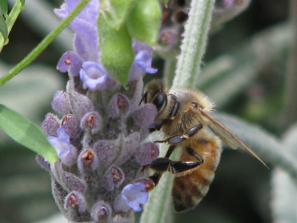 WORKING BEE by Opat