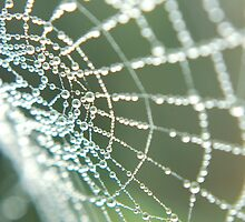 Web of Pearls by Lisa Hill