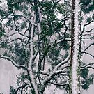 After the Blizzard II by Ern Mainka