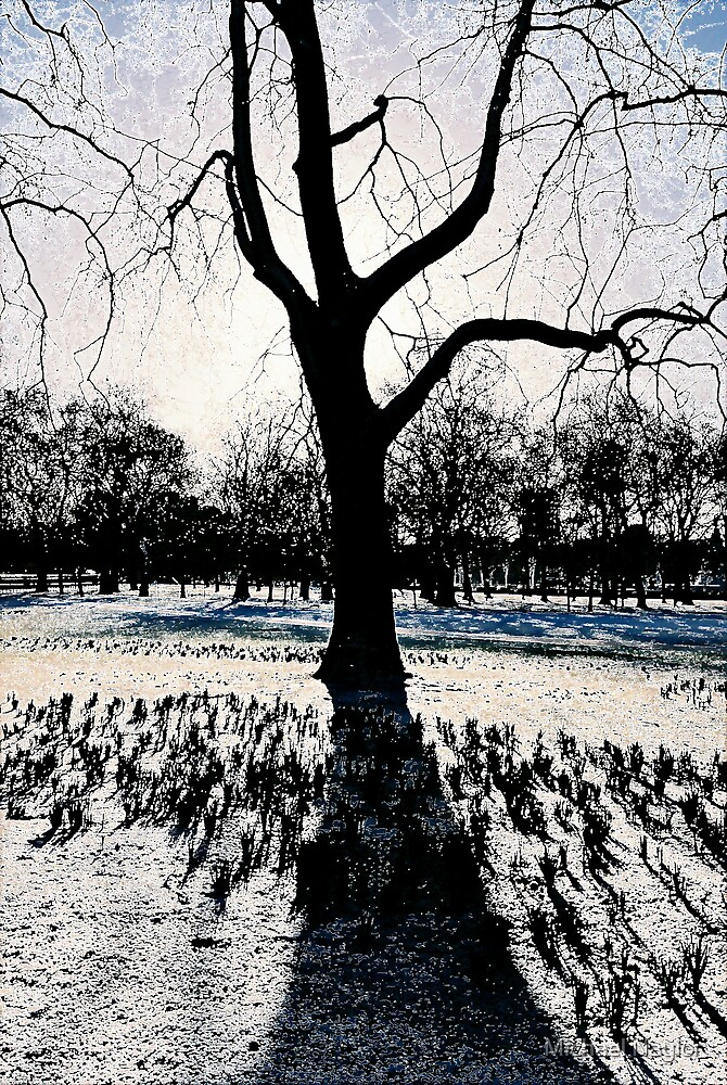 A Colder Tree by Michael Naylor
