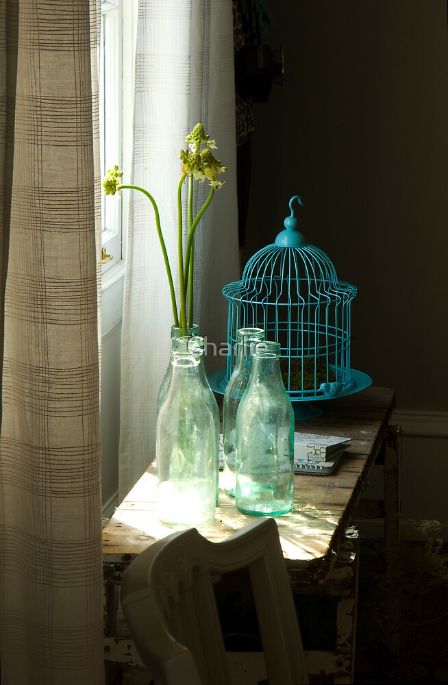 Bird Cage 1 by Charlie