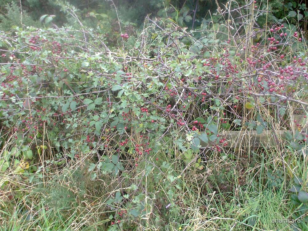 Wild berries by anamcara