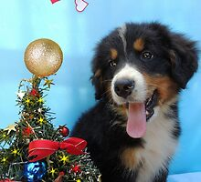 Puppy with its Christmas tree by Viktorcvetkovic