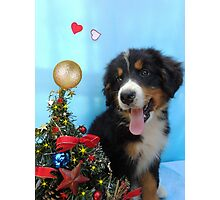 Puppy with its Christmas tree Photographic Print