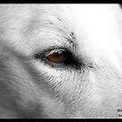 Mia closeup by Jerry  Mumma