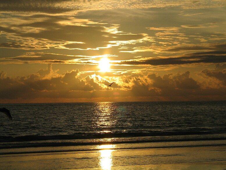 Golden on the Beach by John  Simmons