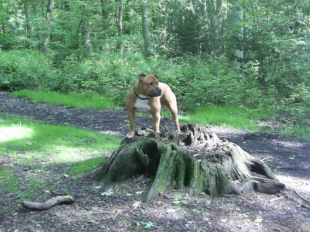 bruno king of the woods by terryjohn2
