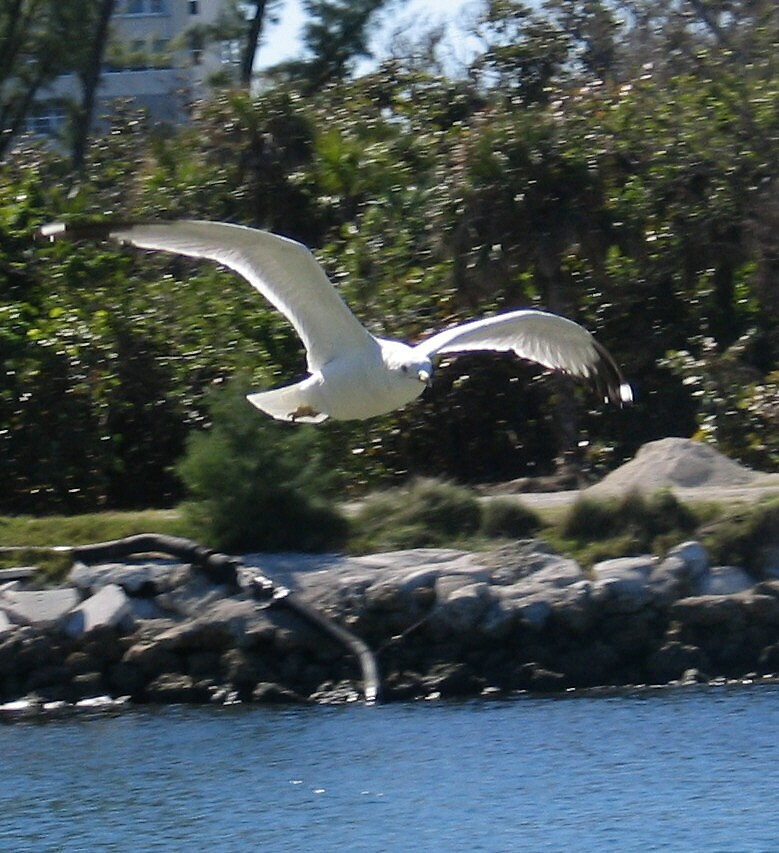 In Flight by John  Simmons