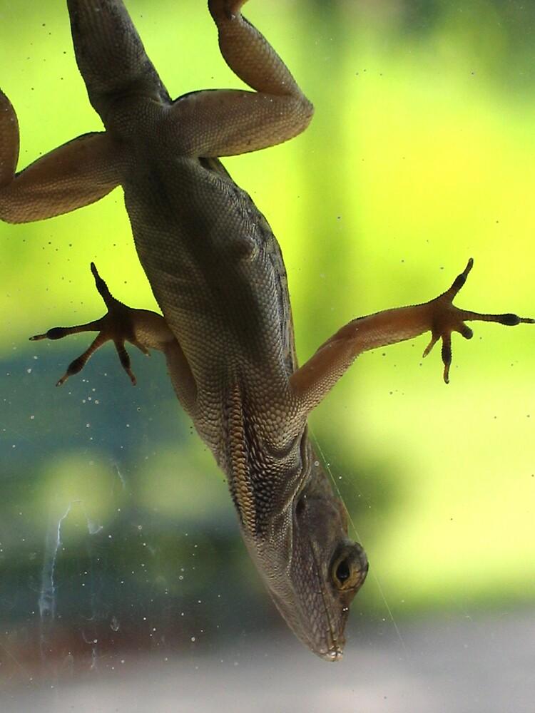 Dirty Window/Lizard by John  Simmons