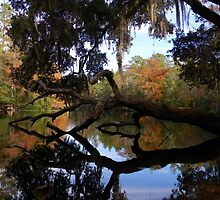 Fall River Reflections 2 by Warren  Thompson
