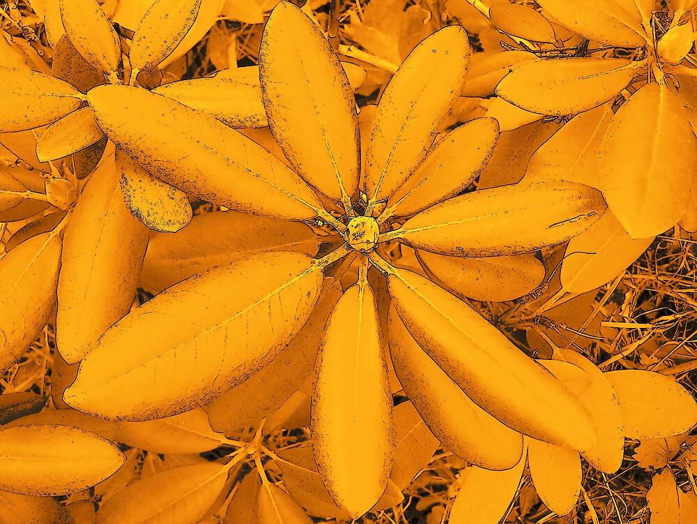 Orange Leaves 4 by Gene Cyr
