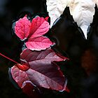 autumn leaves 2 by Frank Brüggemann