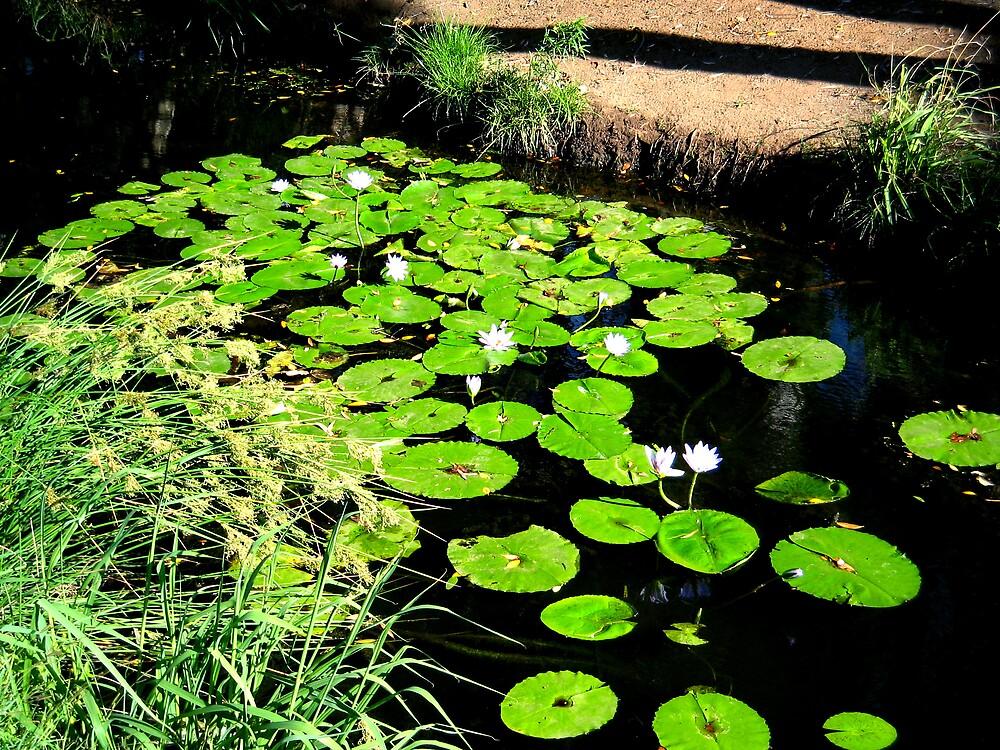 Water Lily's by Rhapsody