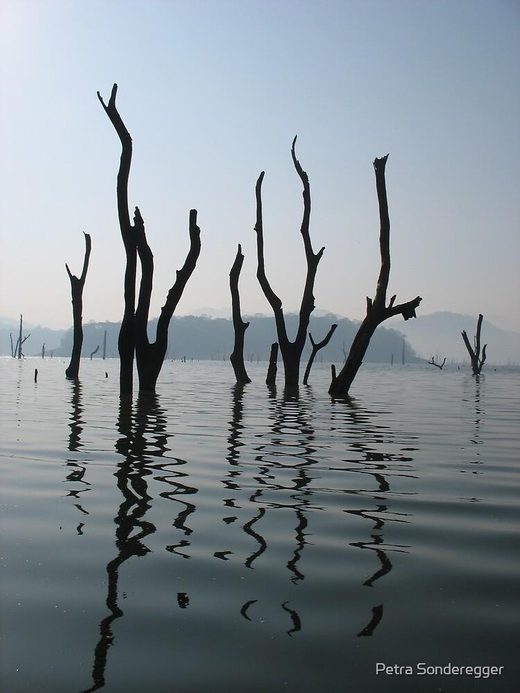 Petrified trees by Petra Sonderegger