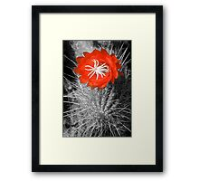 Red Cactus flower blossom Framed Print
