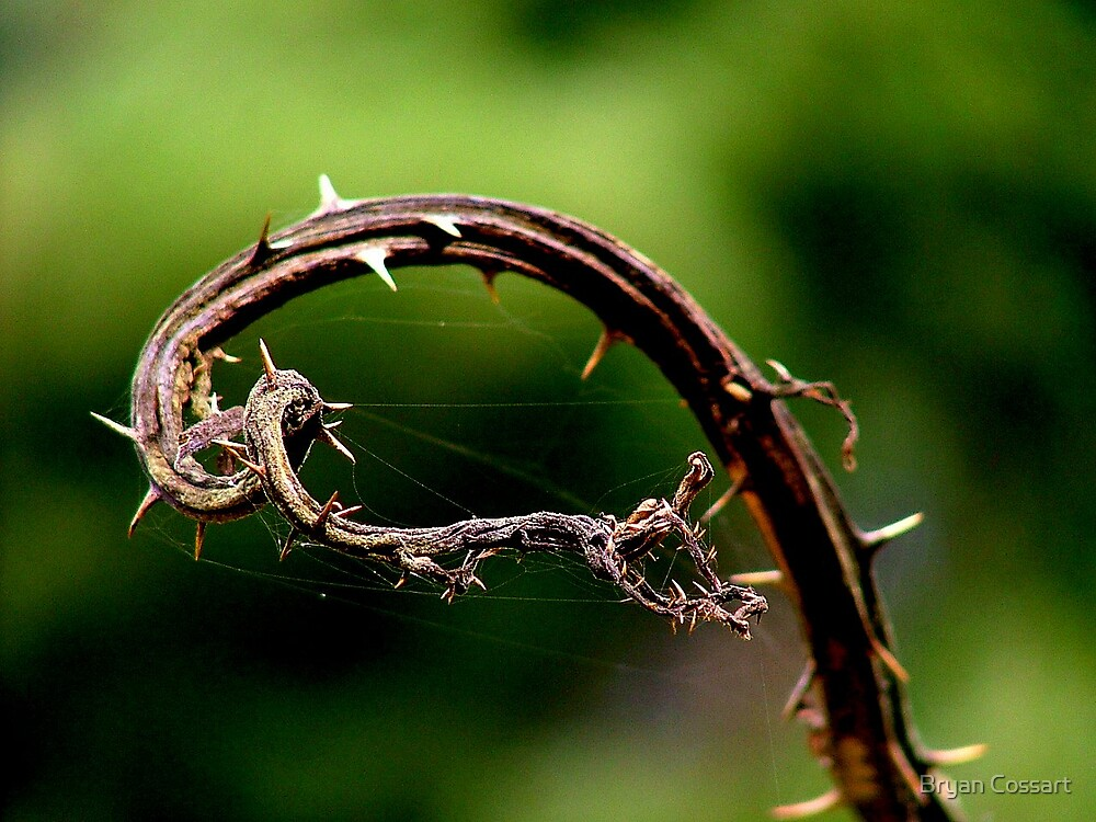 Dying Frond by Bryan Cossart