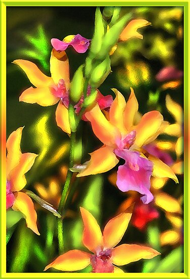 JAMAICAN ISLAND ORCHID FIESTA by miguel