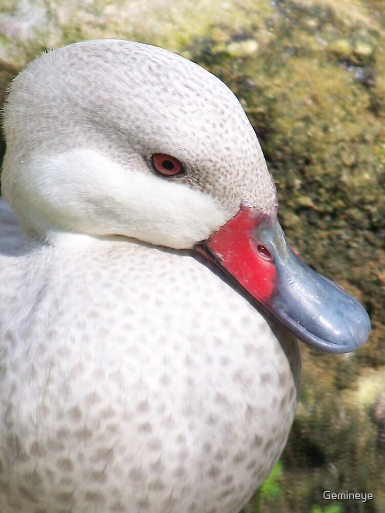 Duck Shot by Gemineye