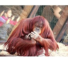 OrangUtan Coiffure Photographic Print