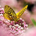 Butterfly Floral by Christina Rollo
