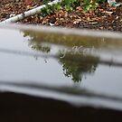 rain by Mazy