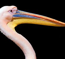 Pink Pelican by Eyal Nahmias