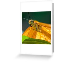 Julia Heliconian butterfly Greeting Card