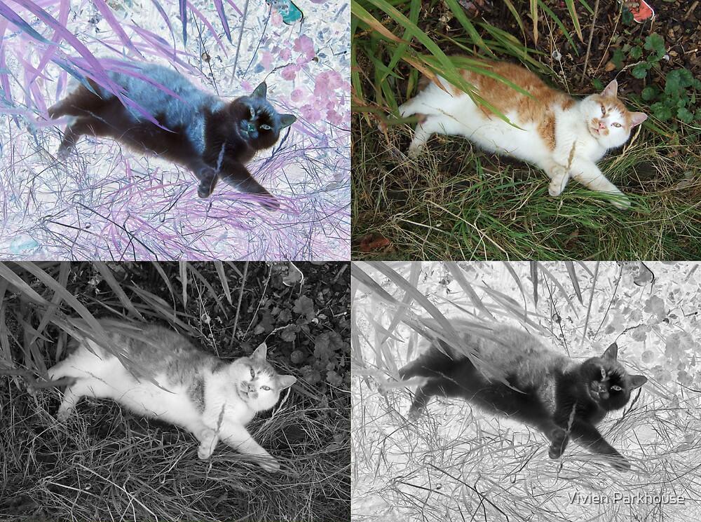 Cat Squared by Vivien Parkhouse