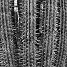 Monochrome Cactus by Imagery