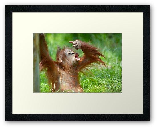 cute baby orangutan by Enjoylife
