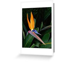 Strelitzia Greeting Card