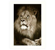 portrait of a big african male lion Art Print