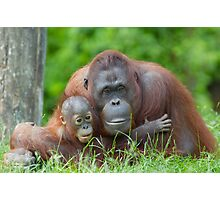 mother orangutan with her cute baby Photographic Print