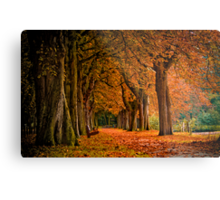 autumn colors in the forest  Metal Print