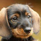 Cute little puppy by Enjoylife
