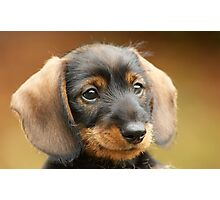 Cute little puppy Photographic Print