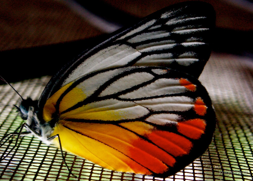 Little Butterfly, Spread Your Wings and Fly by knightingail