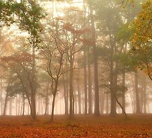 Fog At Warbird Park by ©Dawne M. Dunton