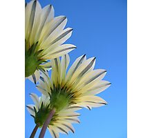Summer Bloom Photographic Print